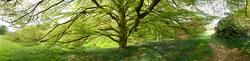 High Beeches Gardens