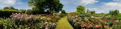 RHS Garden,Wisley 11