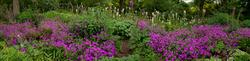 RHS Garden,Wisley 2