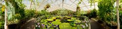 Royal Botanic Gardens Kew 8