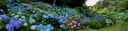 Trebah Garden 5