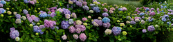 Trebah Garden 6