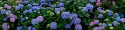 Trebah Garden 9