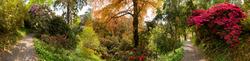 Trebah Garden 14