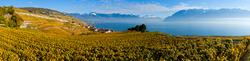 Weinberge am Genfer See 2